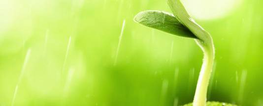 4873933_7_b721_la-biologie-vegetale-ne-cesse-d-observer_523841421f8c97cb859e99512148f873