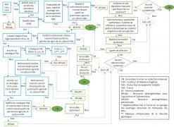 Critères d'identification des RPGAA et RPGPAT et de décision pour l'entrée en collection nationale d'une ressource d'origine française
