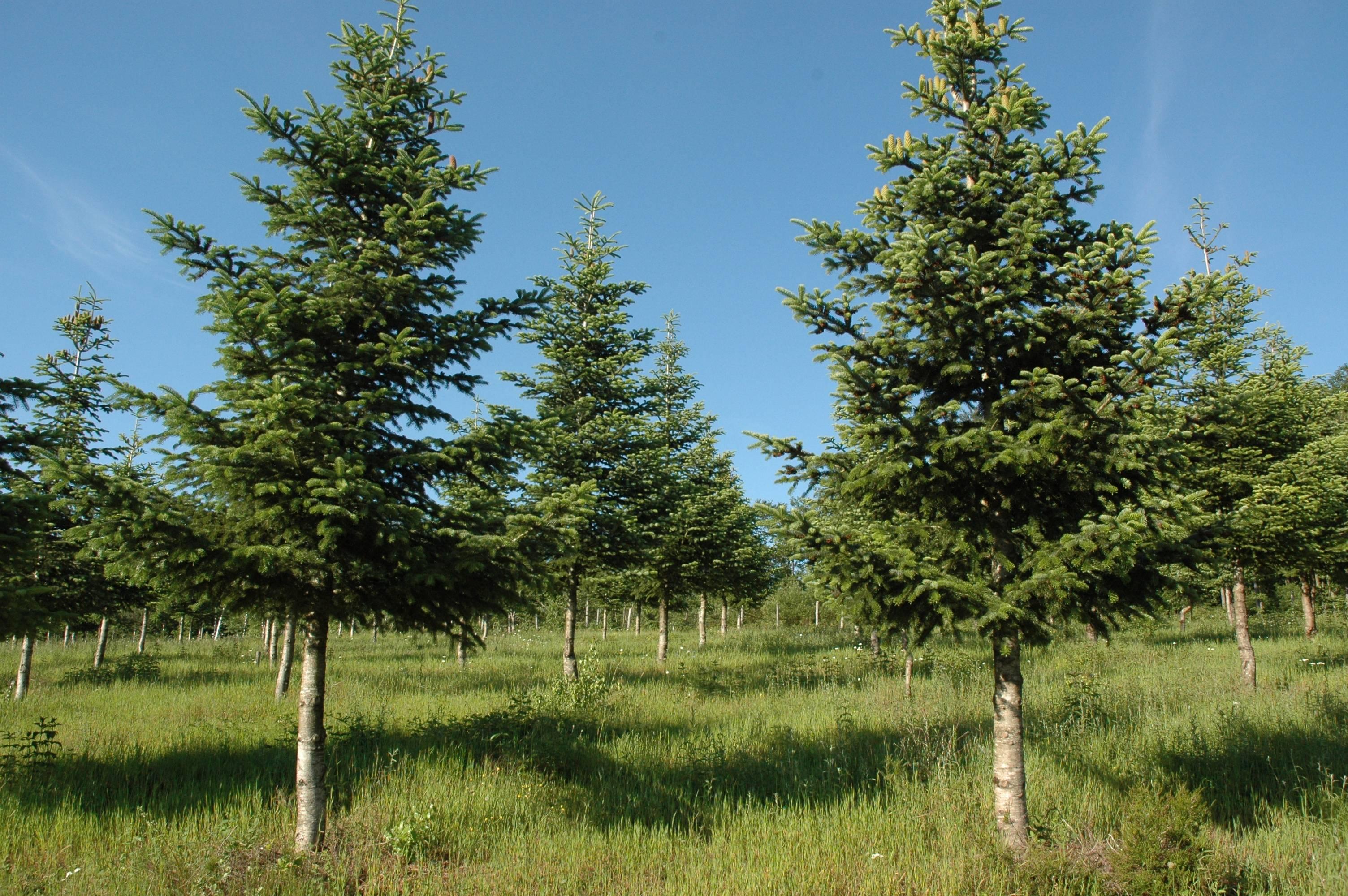 materiel forestier de reproduction